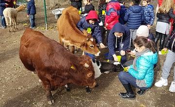 """Il Giardino di Filly ti aspetta a """"Cavalli a Roma"""", nel Padiglione 4. Ad accoglierti ci saranno tanti amici a 2 e a 4 zampe, insieme alla presentazione di tutte le attività della nostra fattoria didattica!"""