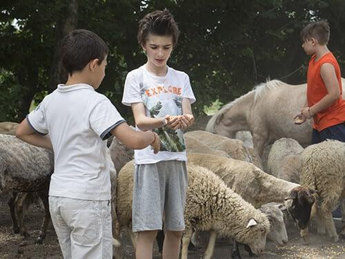 il-giardino-di-filly-fattoria-didattica-mobile-3