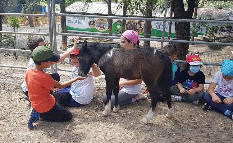 La fattoria didattica e il pony village sono aperti!