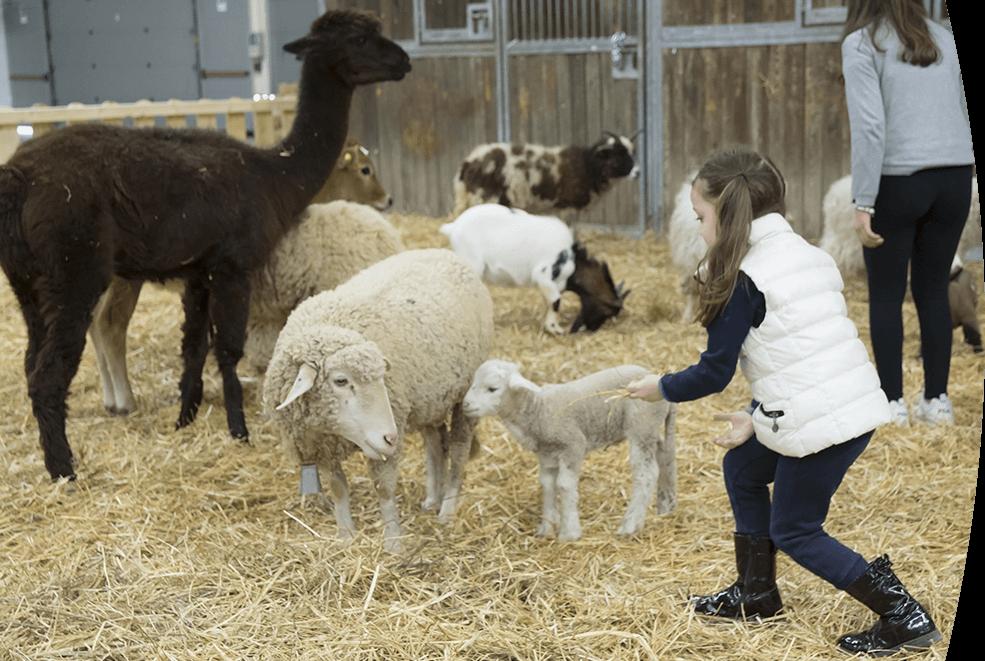 Il giardino di Filly - asilo e fattoria didattica Roma