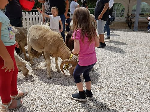 il-giardino-di-filly-attivita-scuole-mobile-5